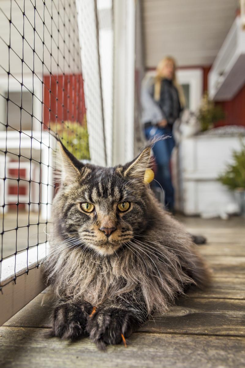 Hem-för-katter-7